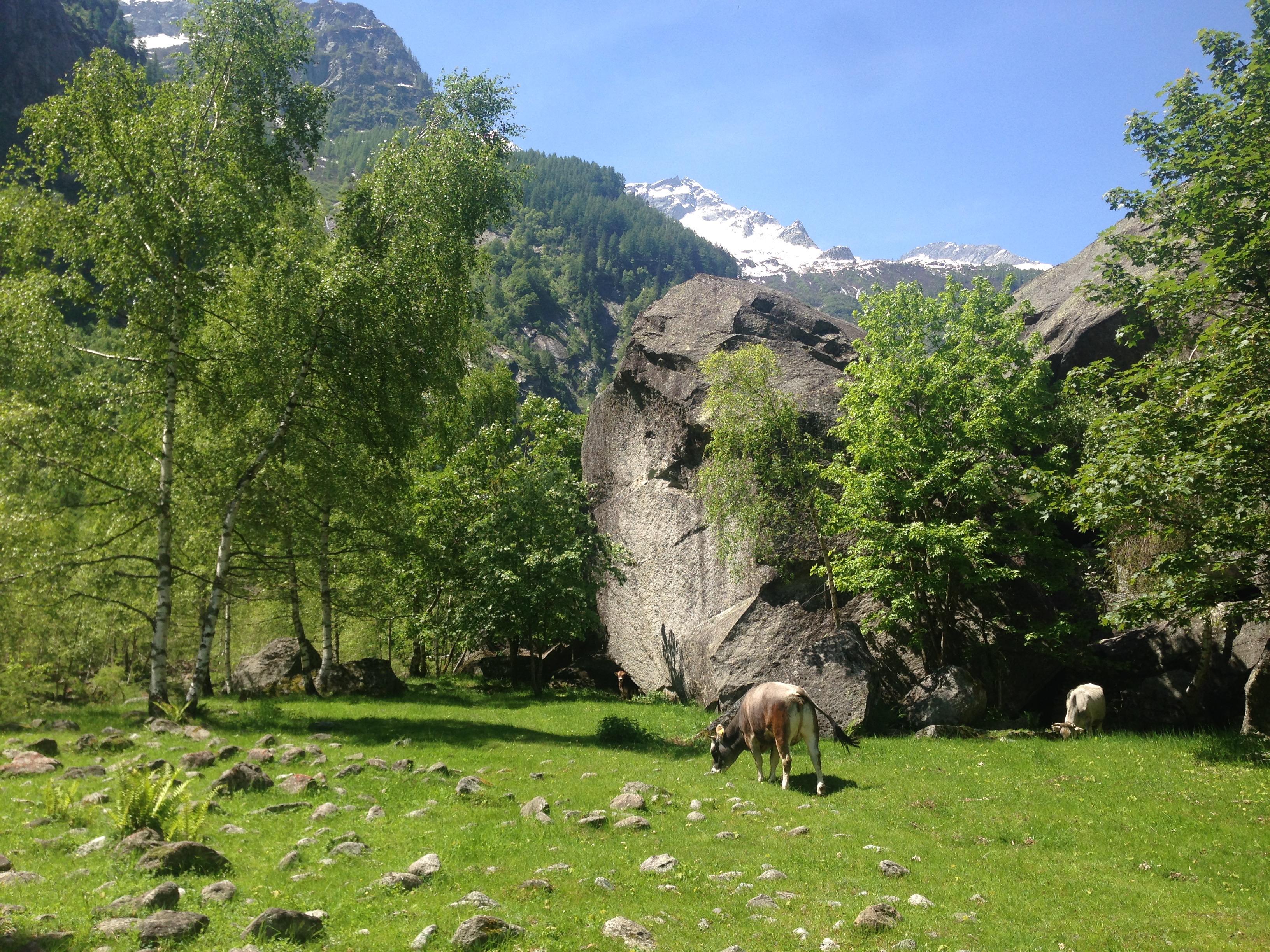 Foto's Zwitserland reis juli 2015